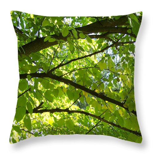 Tree Throw Pillow featuring the photograph Bright Treetop by Michelle Miron-Rebbe