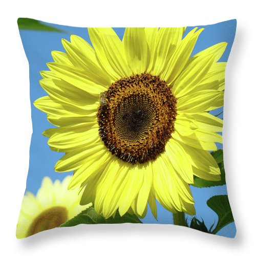 Sunflower Throw Pillow featuring the photograph Bright Yellow Sunflower Art Prints Blue Sky Baslee Troutman by Baslee Troutman
