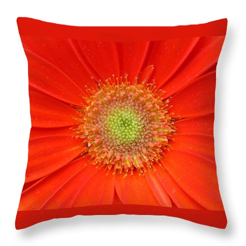 Gerbera Throw Pillow featuring the photograph Brighteyes by Marla McFall