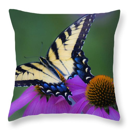 Photographs Throw Pillow featuring the photograph Brilliant And Broke by Teresa Mucha