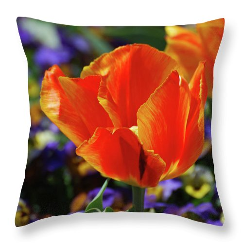 Tulip Throw Pillow featuring the photograph Brilliant Bright Orange And Red Flowering Tulips In A Garden by DejaVu Designs