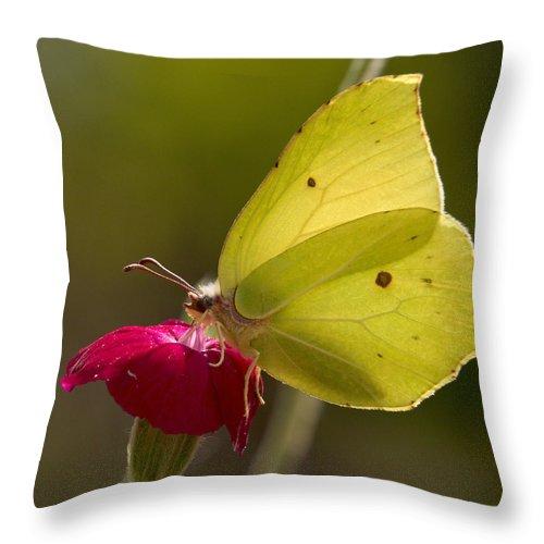 Lehtokukka Throw Pillow featuring the photograph Brimstone 2 by Jouko Lehto