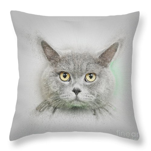 British Shorthair Throw Pillow featuring the photograph British Shorthair Cat by Humourous Quotes