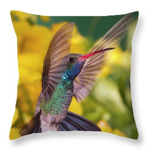 Hummingbird Throw Pillow featuring the photograph Broad-bill Pose by Janet Fikar
