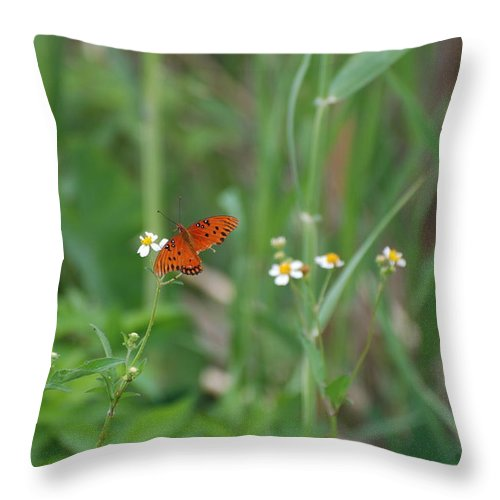 Butterfly Throw Pillow featuring the photograph Broken Wing by Rob Hans