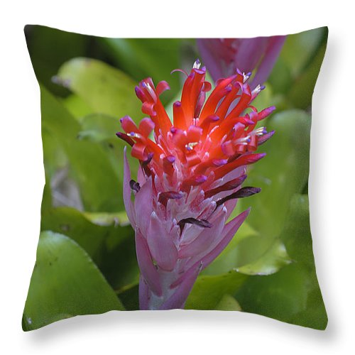 Bromeliad Throw Pillow featuring the photograph Bromeliad Flower by Kenneth Albin