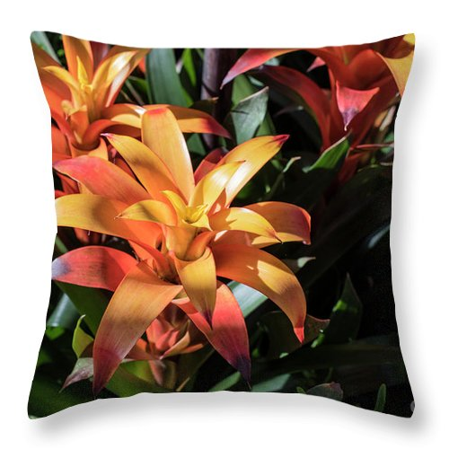 Succulent Throw Pillow featuring the photograph Bromeliads by Judy Wolinsky