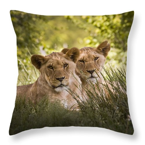 Chad Davis Throw Pillow featuring the photograph Brothers by Chad Davis