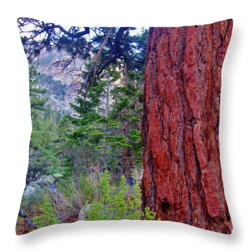 Nature Throw Pillow featuring the photograph Brown Bark by Marilyn Diaz