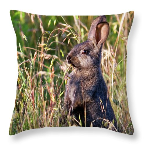 Rabbit Throw Pillow featuring the photograph Brown Bunny by Randall Ingalls