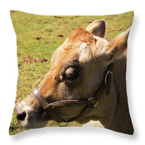Cow Throw Pillow featuring the photograph Brown Cow by Diane Schuler
