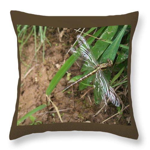 Dragonfly Throw Pillow featuring the photograph Brown Dragon by Sara Raber