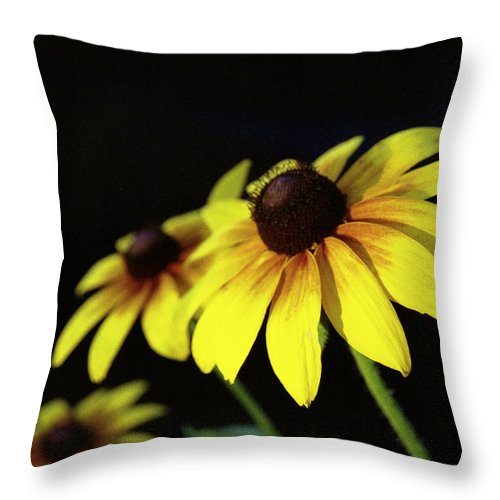Brown Eyed Throw Pillow featuring the photograph Brown Eyed Susan by Michael Peychich
