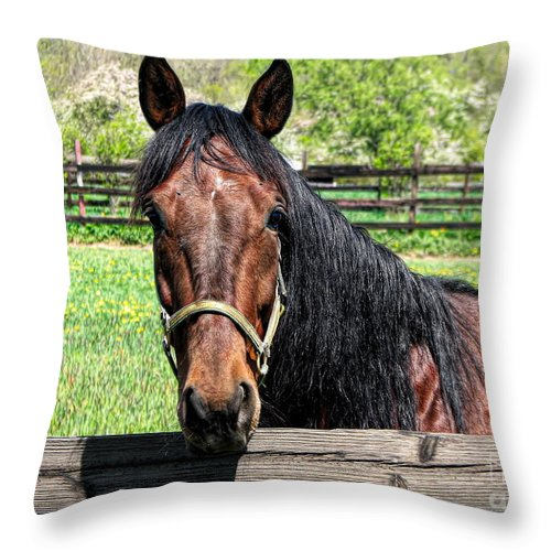 Brown Horse In A Corral Throw Pillow featuring the photograph Brown Horse In A Corral by Rose Santuci-Sofranko