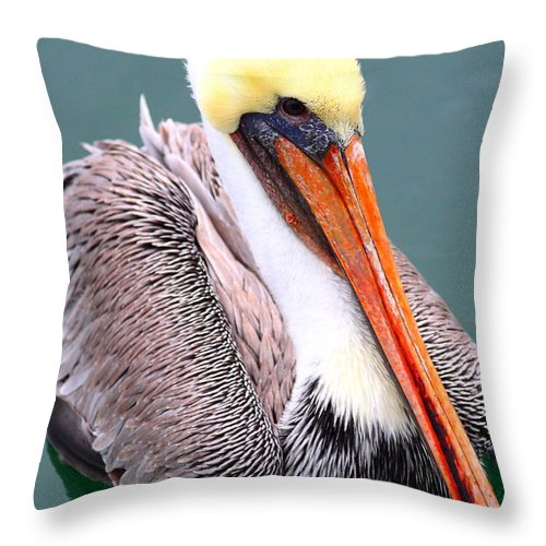 Animal Throw Pillow featuring the photograph Brown Pelican . 7D8291 by Wingsdomain Art and Photography