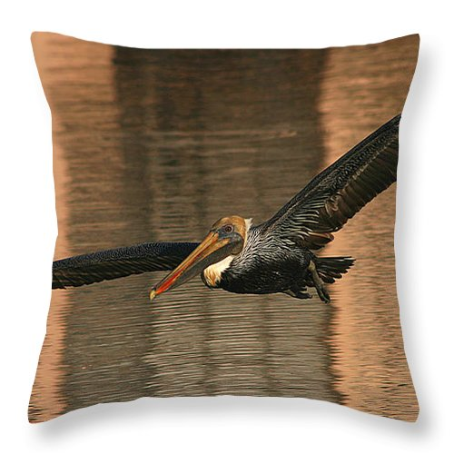 Pelican Throw Pillow featuring the photograph Brown Pelican On A Sunset Flyby by Max Allen