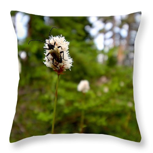 Adventure Throw Pillow featuring the photograph Brown Spruce Longhorn Beetle by Nicholas Miller