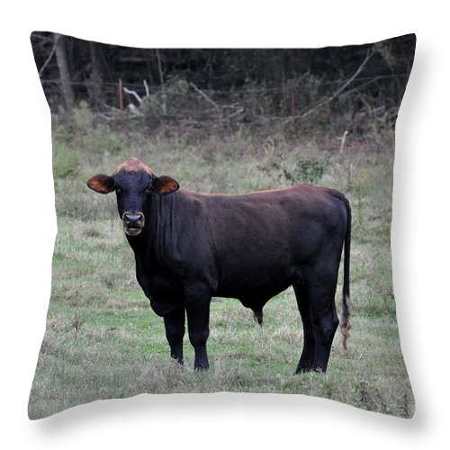 Animals Throw Pillow featuring the photograph Brutus by Jan Amiss Photography