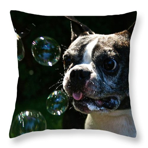 Dog Throw Pillow featuring the photograph Bubble Monster by Susan Herber