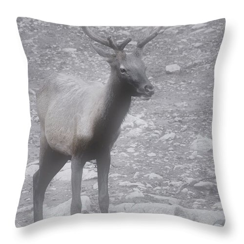 Buck Throw Pillow featuring the photograph Buck In Fog On Hurricane Ridge - Olympic National Forest - Olympic National Park Wa by Christine Till