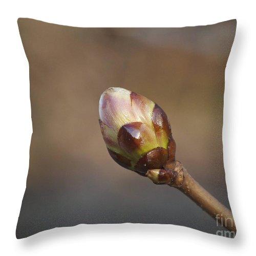 Bud Throw Pillow featuring the photograph Budding by Faith Harron Boudreau