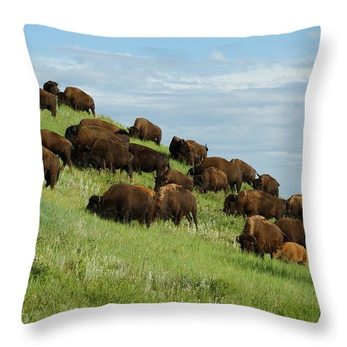 Animals Throw Pillow featuring the photograph Buffalo Herd by Ernie Echols