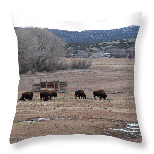 Buffalo Throw Pillow featuring the photograph Buffalo New Mexico by Rob Hans
