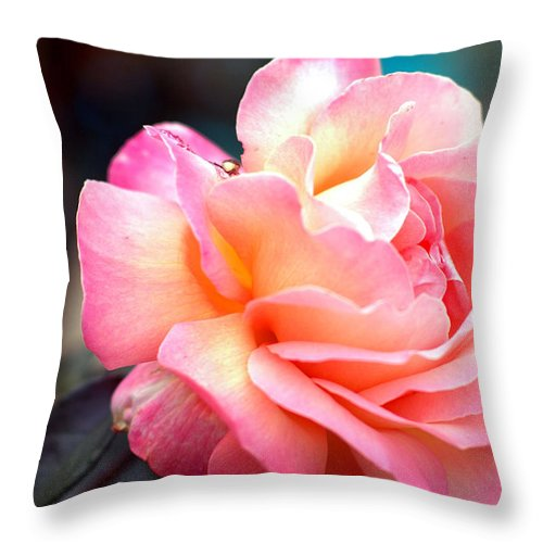 Flowers Throw Pillow featuring the photograph Buffum Rose by Norman Andrus