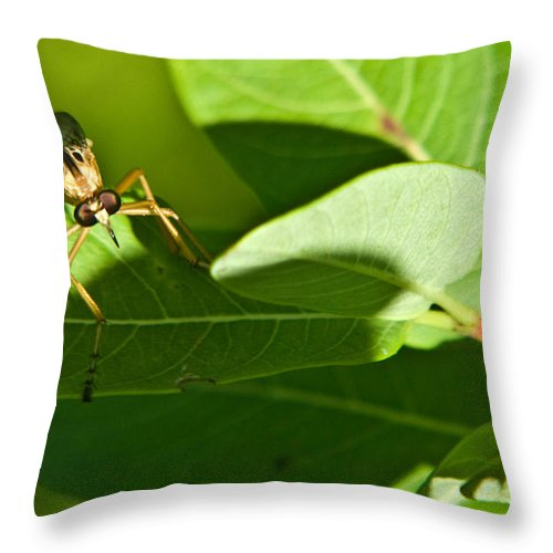 Insect Throw Pillow featuring the photograph Bug Eyes by Douglas Barnett