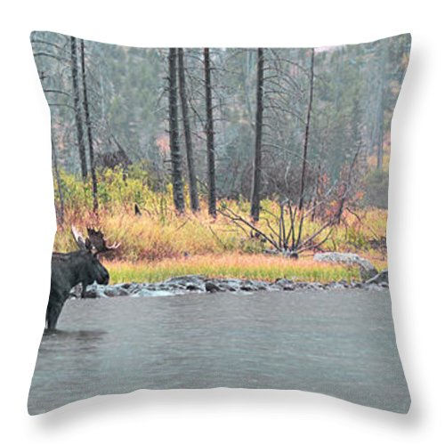 East Rosebud Throw Pillow featuring the photograph Bull And Cow Moose In East Rosebud Lake Montana by Gary Beeler