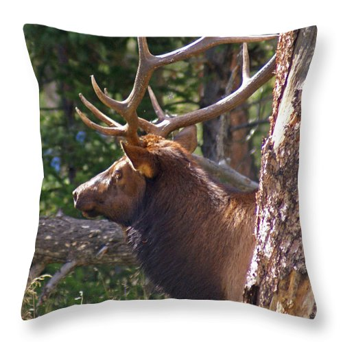 Elk Throw Pillow featuring the photograph Bull Elk 2 by Heather Coen
