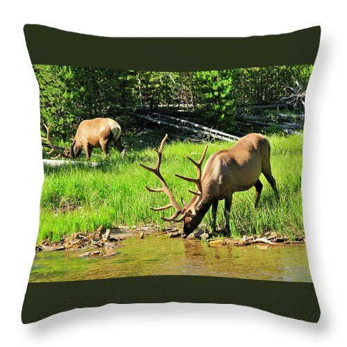Elk Throw Pillow featuring the photograph Bull Elk by Greg Norrell