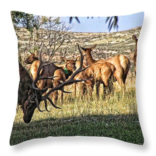 Bull Elk Throw Pillow featuring the photograph Bull Elk In Point by Stephen Schwiesow