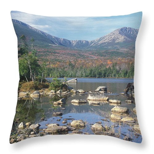 Mount Katahdin Throw Pillow featuring the photograph Bull Moose Feeding In Sandy Stream Pond by John Burk