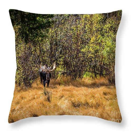 Jon Burch Throw Pillow featuring the photograph Bullwinkle by Jon Burch Photography