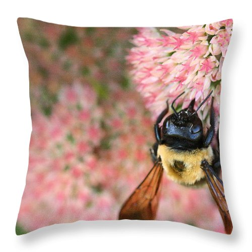 Bee Throw Pillow featuring the photograph Bumble Bee by Angela Rath