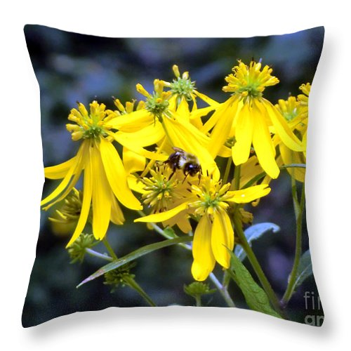 Bumble Bee Throw Pillow featuring the photograph Bumble Bee Daisies by Mindy Newman