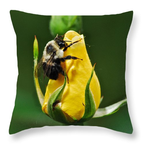 Flowers Throw Pillow featuring the photograph Bumble Bee On Rose by Michael Peychich