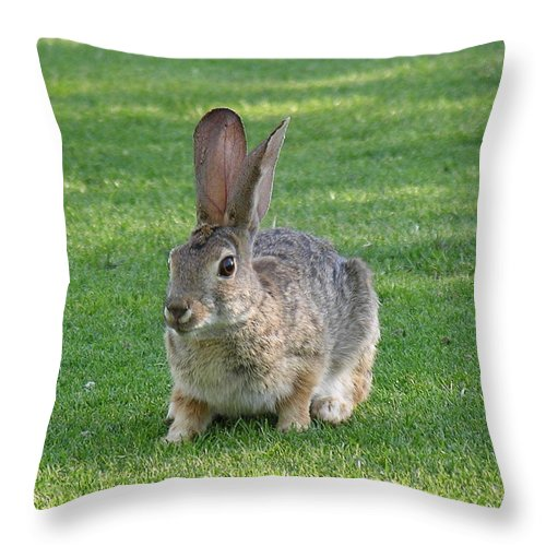 Bunny Throw Pillow featuring the photograph Bunny by Diane Greco-Lesser