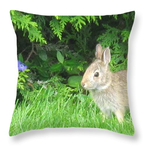 Rabbit Throw Pillow featuring the photograph Bunny In Repose by Ian MacDonald