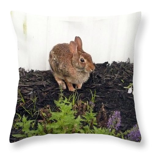 Hare Throw Pillow featuring the photograph Bunny Rabbit by Barb Montanye Meseroll
