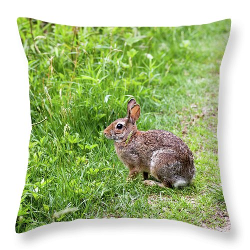 Bunny Throw Pillow featuring the photograph Bunny Rabbit by Robert Popa