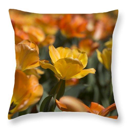 Orange Throw Pillow featuring the photograph Burst by Jennifer Schaefer