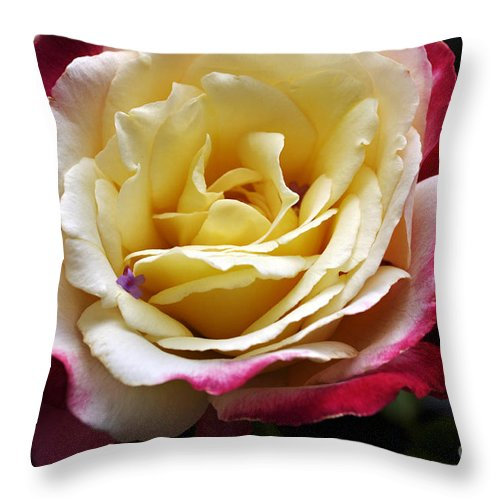 Clay Throw Pillow featuring the photograph Burst Of Rose by Clayton Bruster