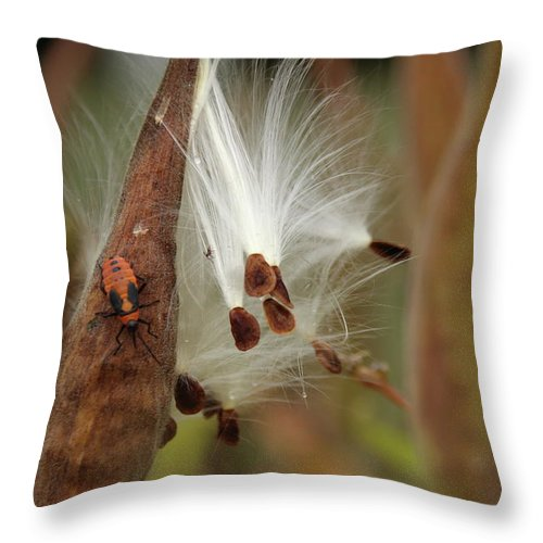 Butterfly Weed Throw Pillow featuring the photograph Bursting With Seeds by Stacey Scott