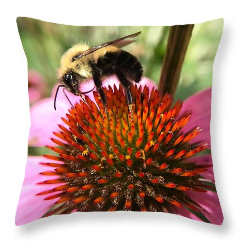 Macro Throw Pillow featuring the photograph Busy Coneflower by Robert Coon Jr