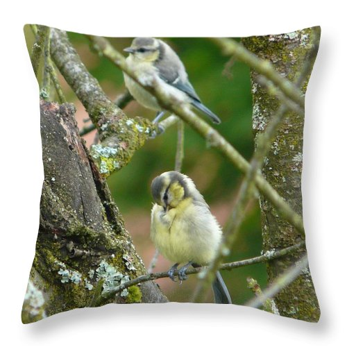 Bird Throw Pillow featuring the photograph Busy Tree by Valerie Ornstein