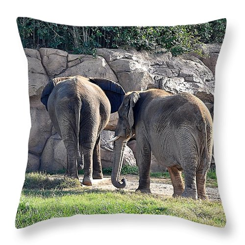 Animals Throw Pillow featuring the photograph But Dear I Love You by Jan Amiss Photography