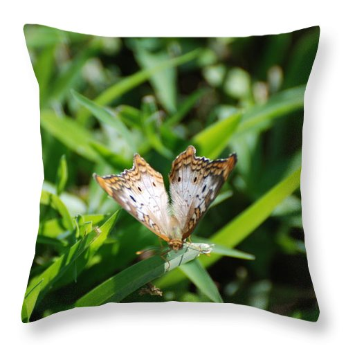 Butterfly Throw Pillow featuring the photograph Butter Fly by Rob Hans