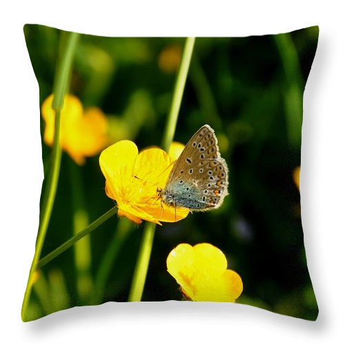 Butterfly Throw Pillow featuring the photograph Buttercup Butterfly by Noah Cole